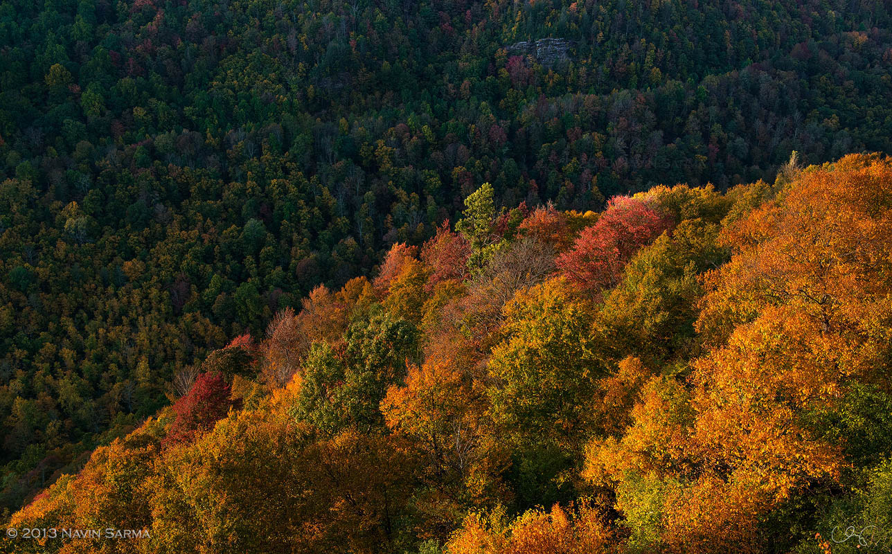 Warm light highlights turning trees on the cliffs of Blackwater Canyon, West Virginia.