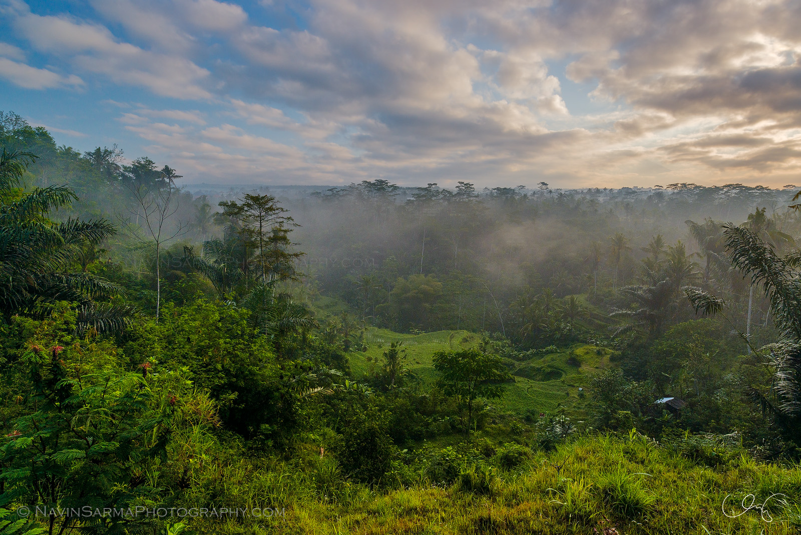 Sunrise at the Rice Field of Ubud Bali