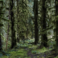 Path to the Hoh rainforest