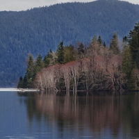 olympic_national_park_lake_tree_reflections_forest