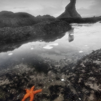 Shi Shi Starfish