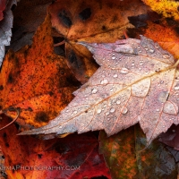 Autumn Droplets