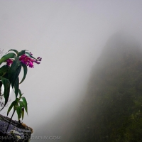 Flower Mountain Peru Fog