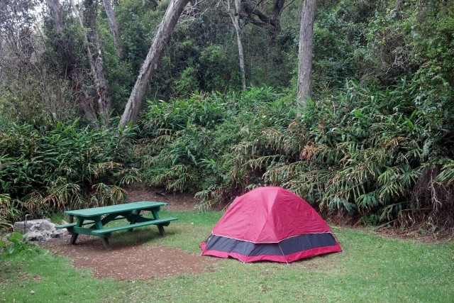 Campsite at Kokee