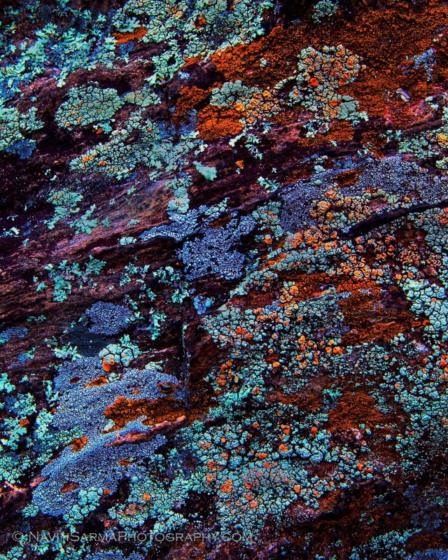 Varied color lichens scattered beautifully across striated rock at Great Falls, MD