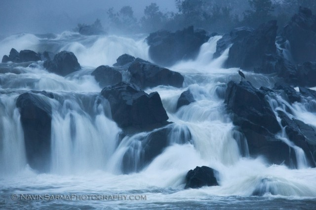 A heron stands tall during a fierce thunderstorm at Great Falls National Park